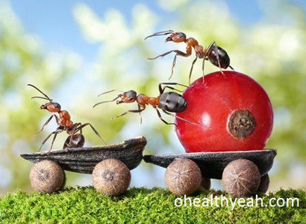 ants at home and garden_resize